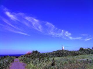 角島灯台からしおかぜコバルトビーチまでの道